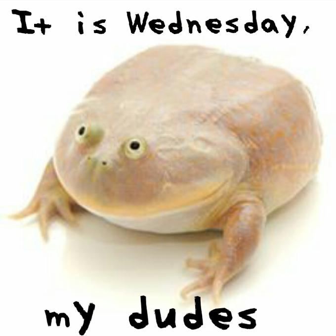 Wednesday Meme it is Wednesday my dudes