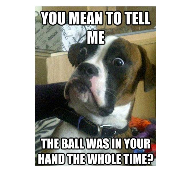 Pitbulls Fall Wallpaper Funny Dog Memes Archives Picsmine