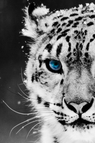 Epic Animal Wallpapers 35 Best Hd Iphone Wallpapers