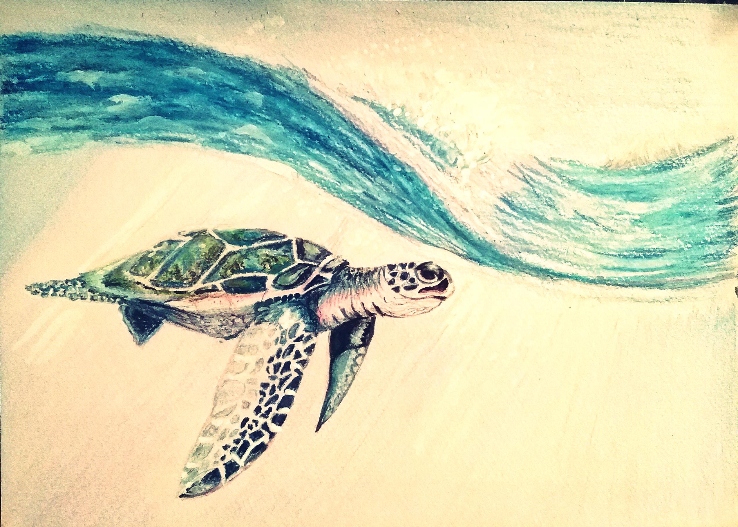 În căutarea țestoaselor cu gâtul lung