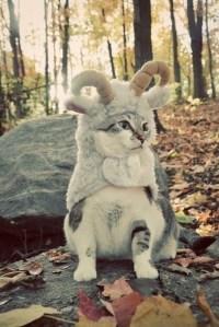 jacket, pet, cats, animal clothing, animal clothing, cat ...