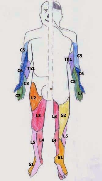 【芳澤徒手保健中心】淺談案例,讓您透過案例的說明來更了解徒手保健的意義::腰椎-坐骨神經痛