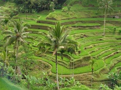 Sistem Irigasi Subak di Bali