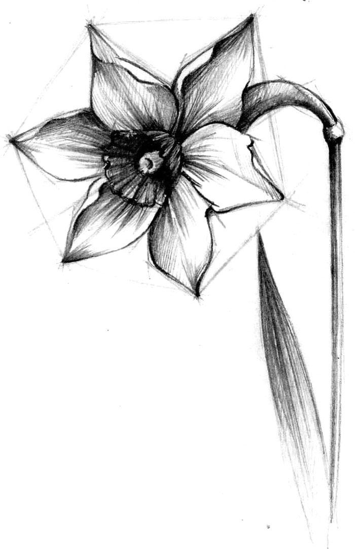 ряд цветок рисунок карандашом простой колбаса