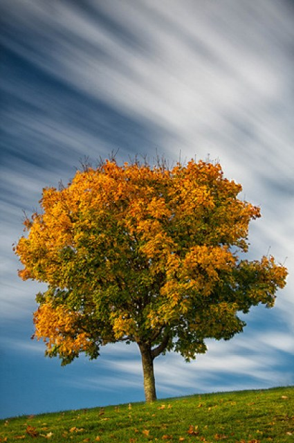 tree with fall colors against cloudy sky