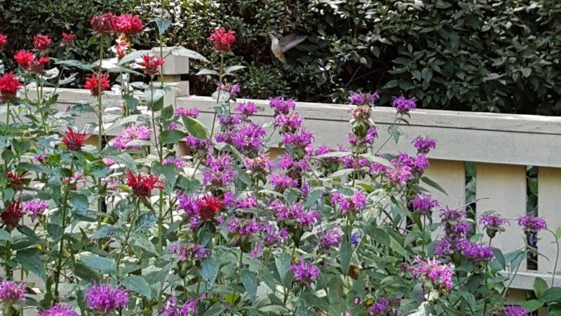 A Hummingbird In The Garden