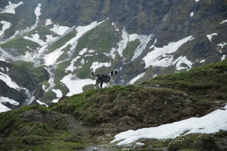 Wegbegleiterin in den Bergen