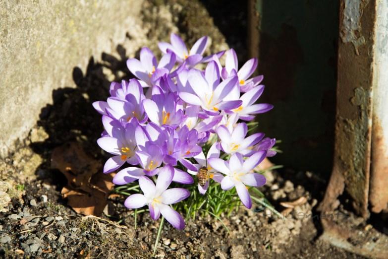 early springsummer in February 19