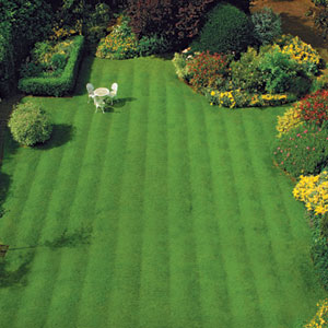 Chesterfield VA Lawn Care Weed Control