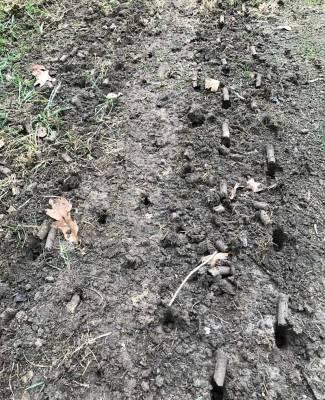 Core Aeration and Seeding | Fertilization | Picture Perfect Lawn Maintenance | (804) 530-2540
