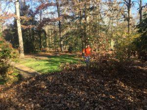 leaves | Lawn Care | Fertilization | Picture Perfect Lawn Maintenance | (804) 530-2540