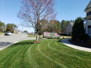 A Picture Perfect lawn with weed free mulch beds.