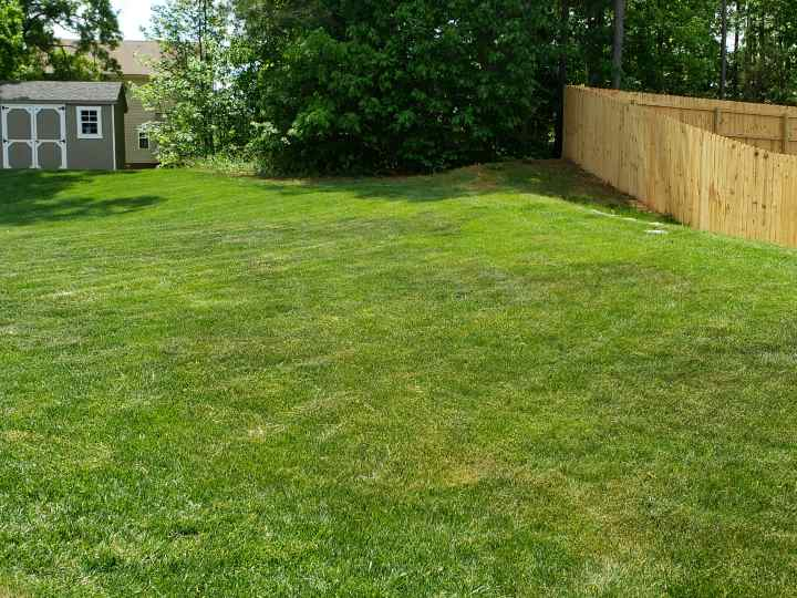Fescue and Heat