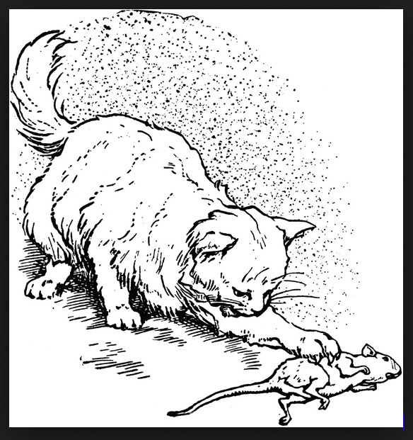 Do Cats Hunt and Kill Rats Out Of Instinct Or Are They