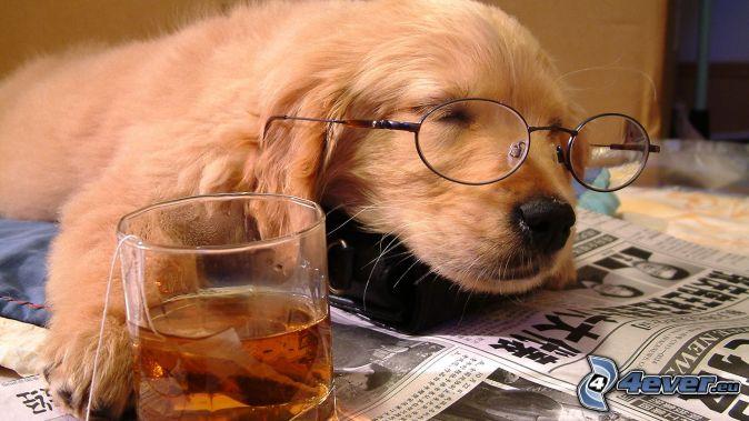 sleeping dog, tea