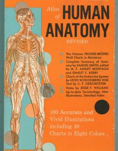 Atlas of human anatomy frohse franz max brodel and leon schlossberg also by rh abebooks