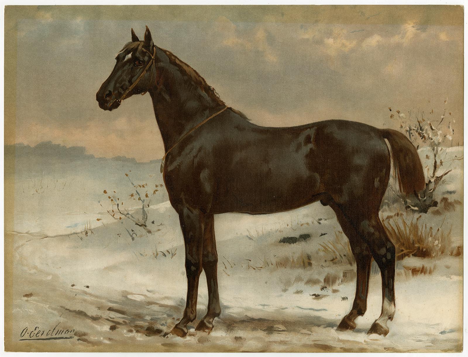 Rare Antique Print Russian Half Blood Horse Pl 27 Eerelman 1898 Kunst Nbsp Nbsp Grafik Nbsp Nbsp Poster Theprintscollector