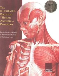 The illustrated portfolio of human anatomy and scientific publishing also wall chart used abebooks rh