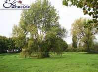 Haus kaufen in Gro-Gerau (Kreis) - ImmobilienScout24