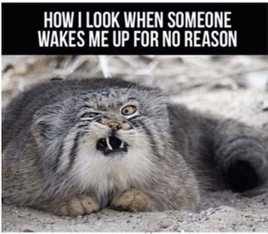 That look when someone wakes you up without reason