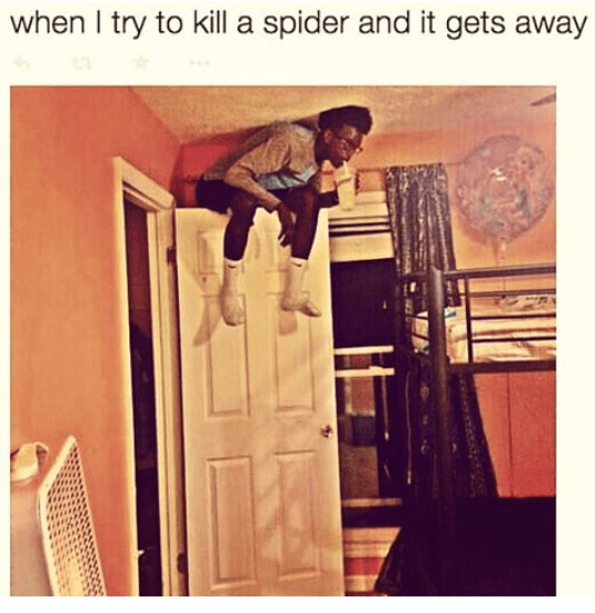 When you try to kill a spider and it gets away