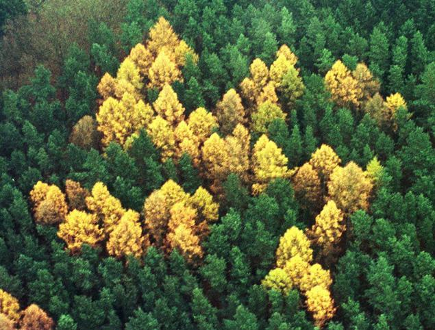 Nazi Forest