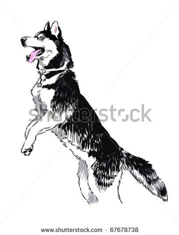 picture of a husky dog with his front legs in the air and