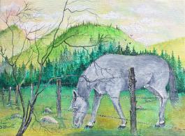 Grey Stallion 9x12 Canvas