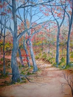 Trail Through The Woods 20x16 Canvas