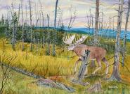 Moose On Trail 12x16 Canvas