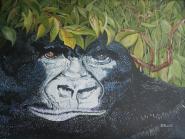 Gorilla 12x16 Canvas