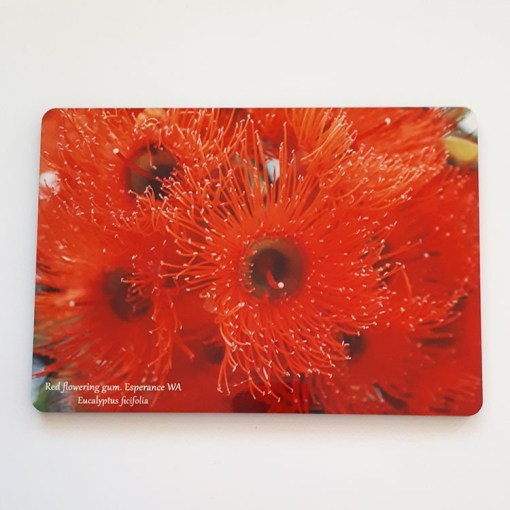 placemat red flowering gum