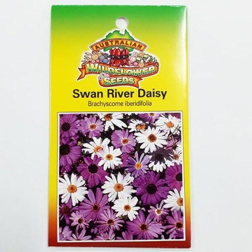 Swan River Daisy flower