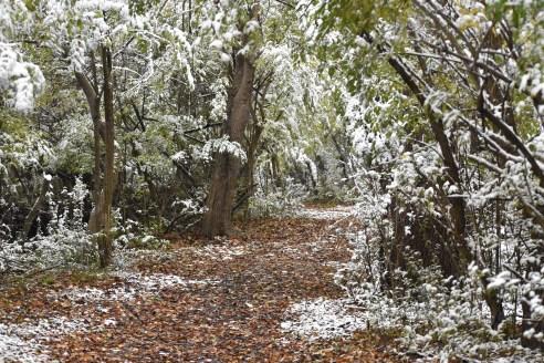 path through woods 11-9-2018 9-02-16 AM