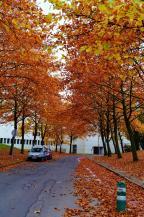Autumn in Louvain-la-Neuve