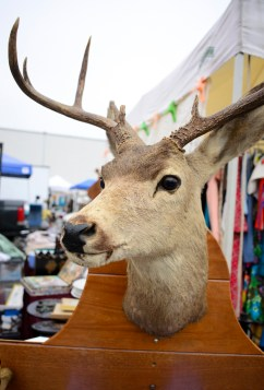 Lots of taxidermy on sale at the market.