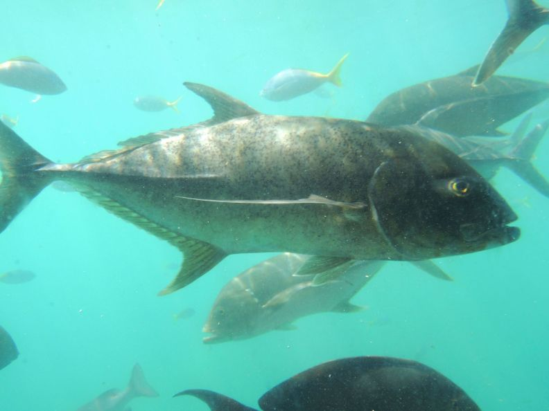 Ryby za sklom