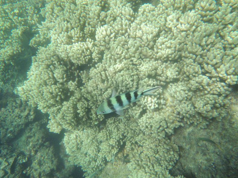 Koralová bariéra 5
