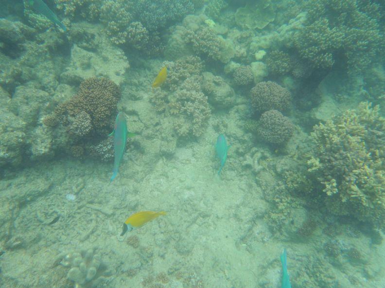 Koralová bariéra 8