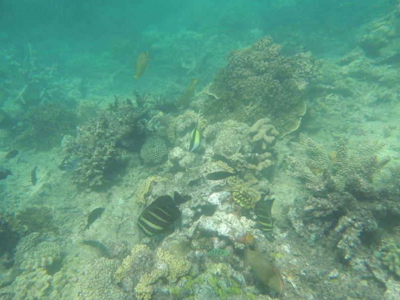 Koralová bariéra 9