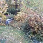 Der Herbstgarten – geordnetes Chaos oder chaotisch???