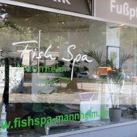 Fish Spa Mannheim - Entspannen wie im Urlaub #fischpediküre #fishspa #garrarufas