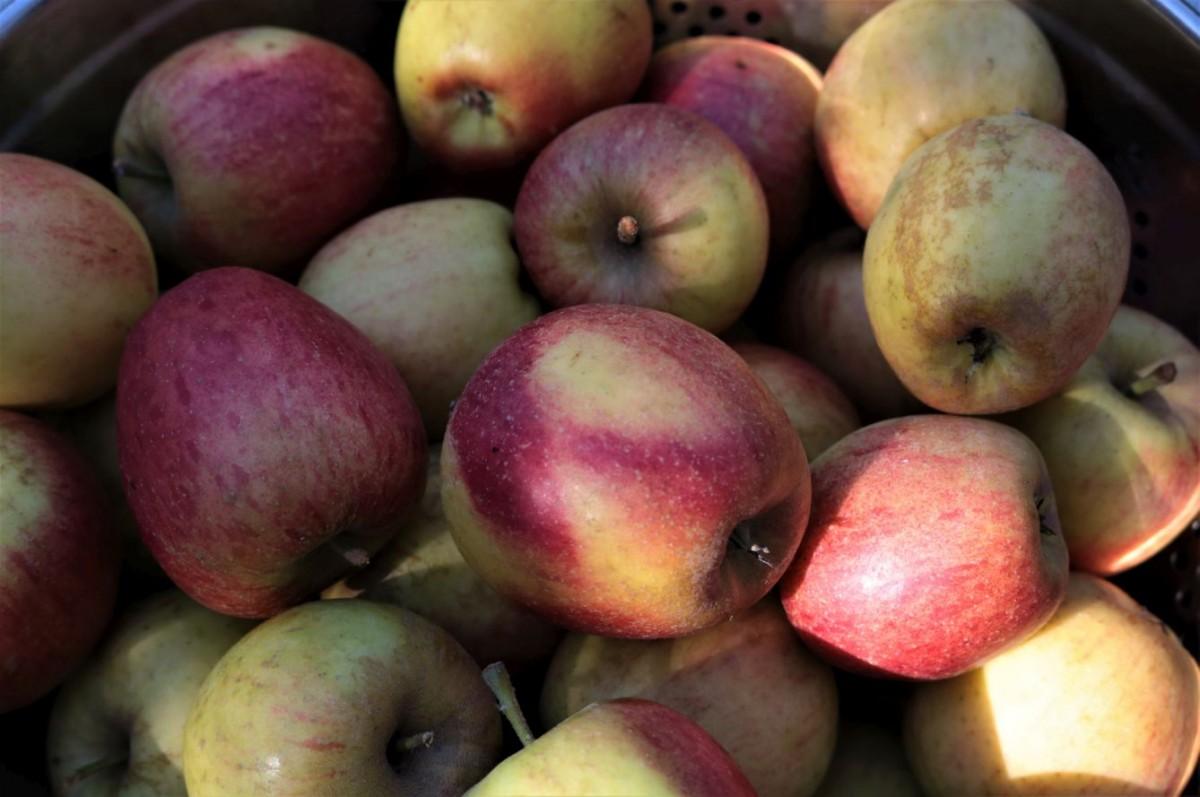 Apfellikör - aus Miniäpfeln wird ein Weihnachtsgeschenk