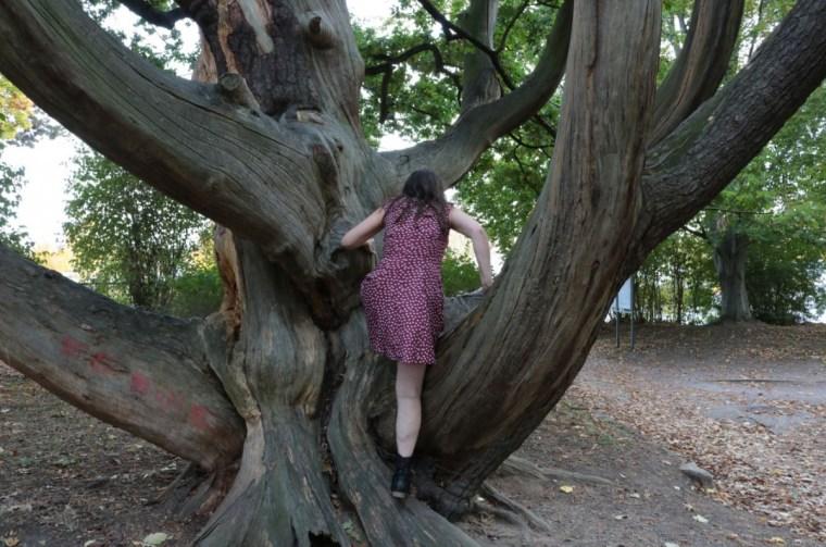 Aufgeben, niemals, ist der Weg auch noch so steil, der Baum auch noch so hoch, ich schaffe es, vielleicht nicht direkt, aber über Umwege, in meinem Tempo