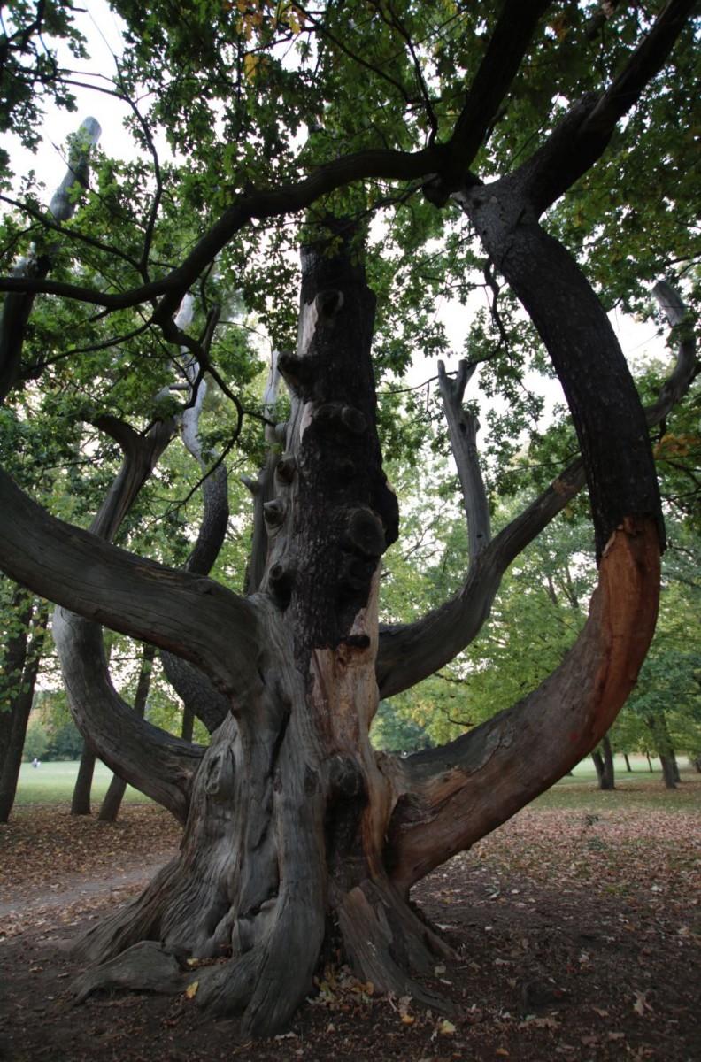 Baum des Lebens, Träume verwirklichen