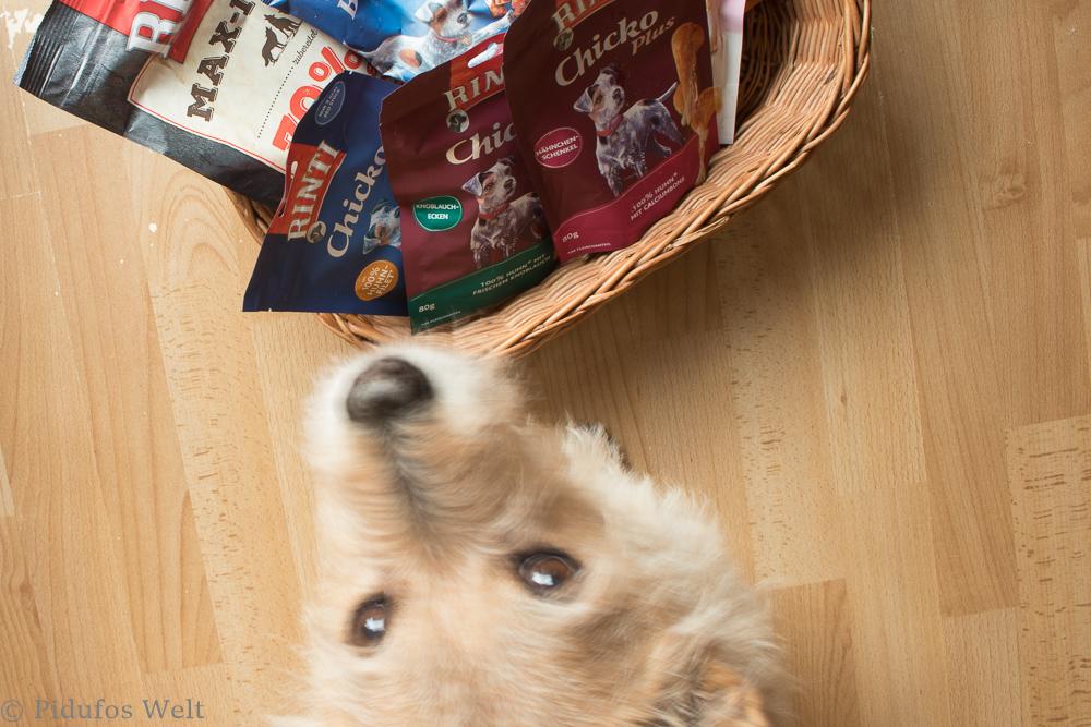 Hundeadventskalender