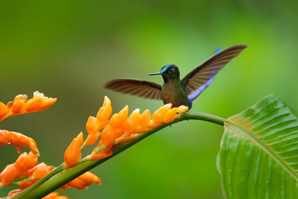 Mashpi reserve in Ecuador