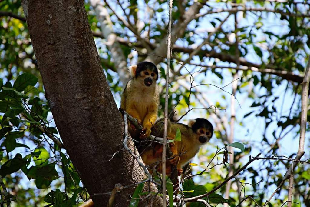 Bolivia travel guide Madidi National Park