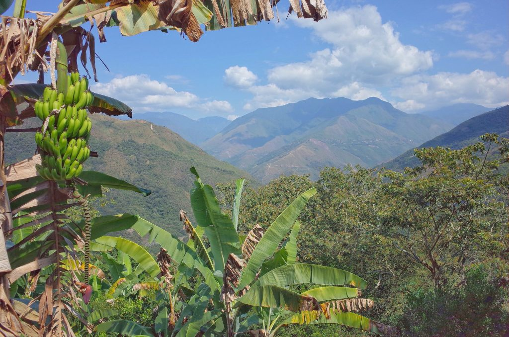 Los Yungas Bolivia travel guide