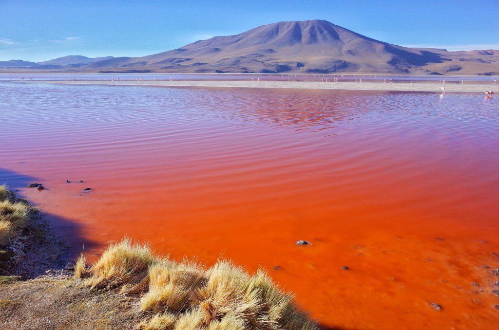 Laguna Colorado Salar de Uyuhni Visit Bolivia